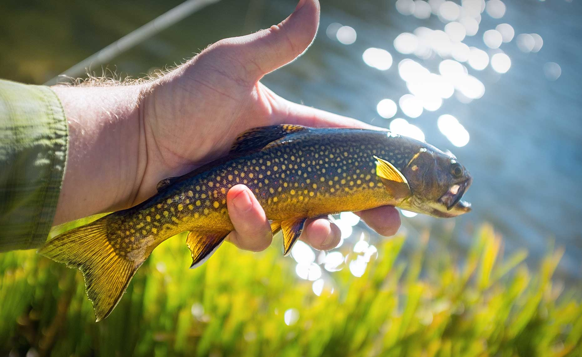 High Country Brookie